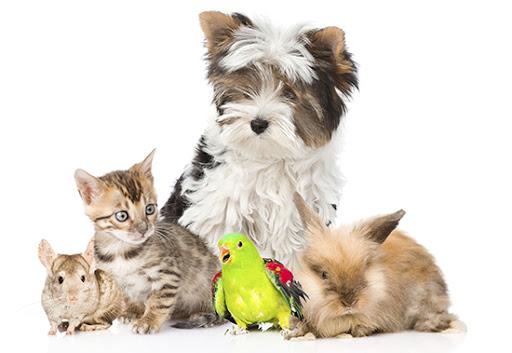 Perkamiausios gyvūnų prekės internetu